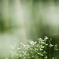 写真: 藪の中から