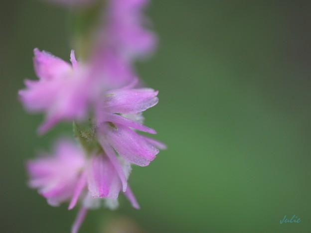 螺旋に咲く花