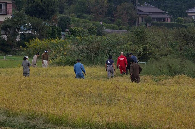 ワイルドスピリッツ 稲刈り 2010
