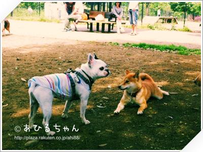 写真: 20110523_05