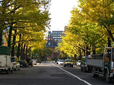 道庁前の銀杏並木3