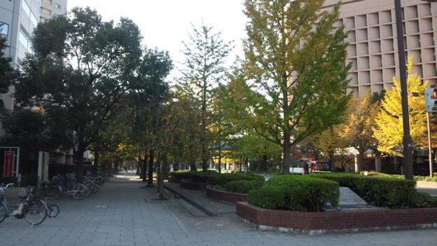 中央区明石町