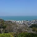 写真: 白野江植物公園(5)