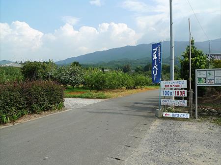 内藤ブルーベリー園(2)