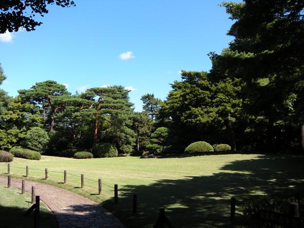 写真: 大芝生