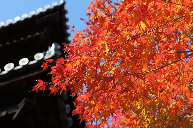 写真: IMG_9889京都の紅葉_2010年11月