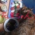 Photos: 花音ちゃん!!