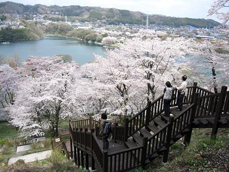 津久井湖の桜(8)