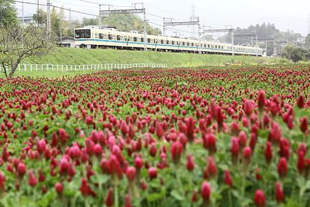 新緑と小田急線(2)
