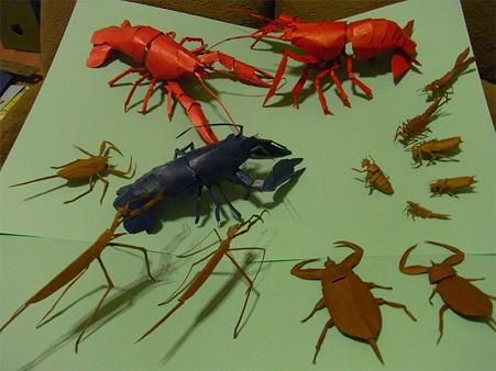 川辺の生き物たち