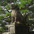 Photos: 松の緑