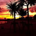 沖縄の海や自然│Photoflowery