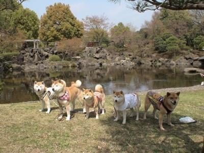 日本庭園と日本犬
