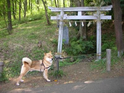 写真: 即席狛犬