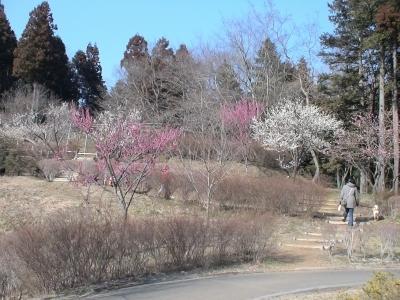 梅は~咲いたか~