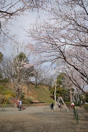 桜 2010 秋葉台公園 03