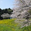 写真: 小湊鉄道の桜 2010 04