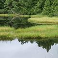 モウセンゴケの渋池