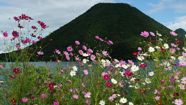 Photos: 榛名富士とコスモス1