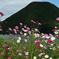 榛名富士とコスモス1